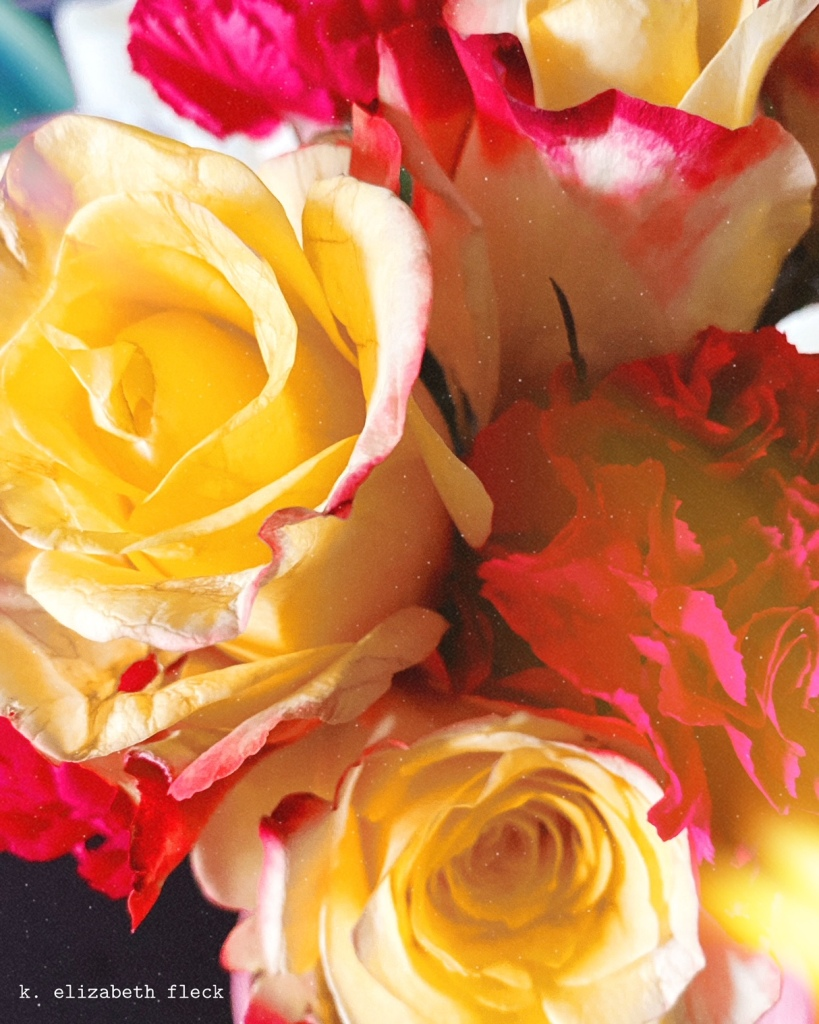 pink and yellow roses, K E F